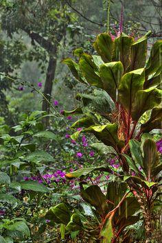http://fineartamerica.com/featured/rainforest-kandy-hurley.html?newartwork=true