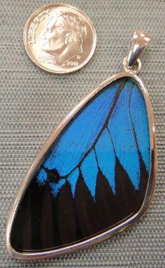 butterfly jewelry...