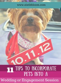 11 Tips To Incorporate Pets into a Wedding or Engagement Session, Pet Photography, Pet Photo Tips, Photography Tips