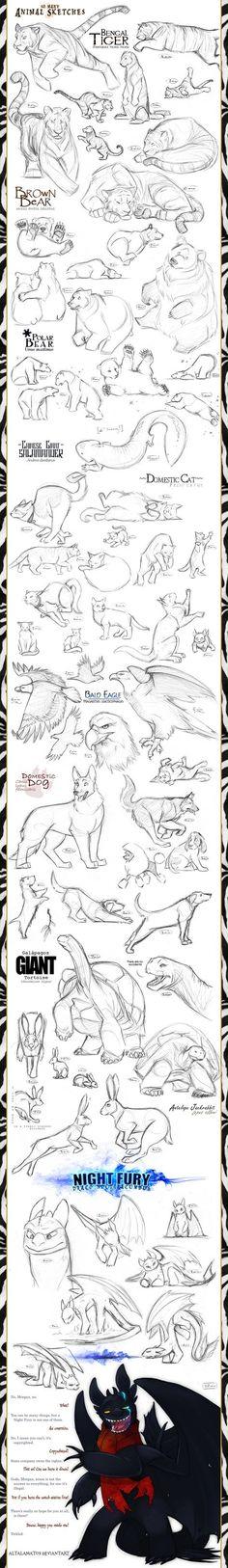 Animal Sketches by Altalamatox.deviantart.com on @deviantART || CHARACTER DESIGN REFERENCES | Find more at