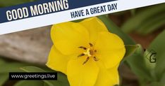 Share greetings with your best friends say good morning at morning time. Positive looking flowers greetings for what's aop, Facebook, Instragram and Twitter Mornings good morning Flower greetings for your bestfriends Mornings good morning Flower greetings for your
