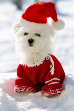 Christmas Puppy, Winter - Portrait of Maltese Puppy in Santa Hat Sitting in Snow
