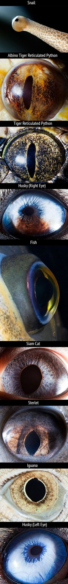 Here's another batch of mind-blowing macro photographs of animal eyes by Suren Manvelyan.