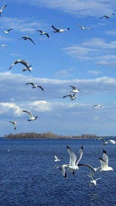 Birds In The Sky, Sea Birds, Beautiful Birds, Animals Beautiful, Nicolas Vanier, Boat Wallpaper, Sky Sea, Watercolor Bird, Seascape Paintings