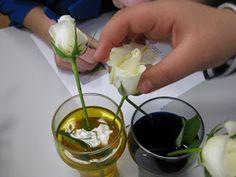 bloemen verven met gekleurd water