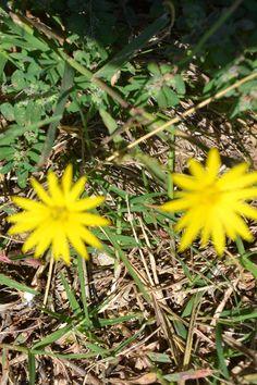 Little Texas wildflower