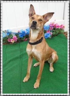 CHLOE-FRIENDS OF SHELTER ANIMALS FOR COBB COUNTY1060 Al Bishop Drive Marietta, GA 30008 ckersey533@aol.com