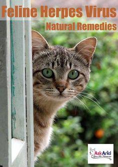 Natural Treatments For Feline Stomatitis Cat Nutrition