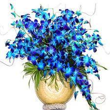 Orchids http://www.a1hyderabadflowers.com/