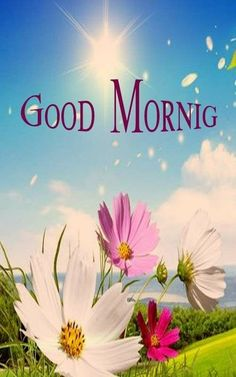 Good Morning Pic Hd, Rainy Good Morning, Latest Good Morning Images, Good Morning Beautiful Pictures, Good Morning Images Flowers, Good Morning Image Quotes, Good Morning My Friend, Morning Quotes Images, Good Morning Images Download