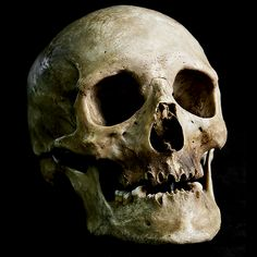 An alleged skull collector in Austria is arrested after cops find 56 skulls in his home, all taken from a cemetery.