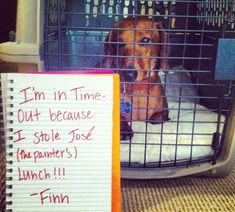 23 Reasons Why Dachshunds Are The Undisputed Champions of Dogshaming