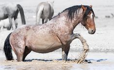 Horse stock photos, royalty-free images, vectors, video Horse Water, Horse Photography, Wild Horses, Royalty Free Images, Vectors, Stock Photos, Drawings, Animals, Animales
