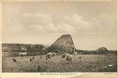 oude foto's schapenboet - Google Search