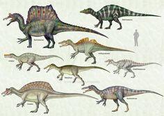 Spinosauridae
