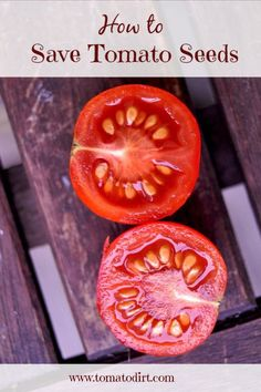 How to save tomato seeds with Tomato Dirt #TomatoGrowingTips
