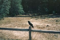 a raven that visits her every so often