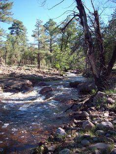 Gila National Park New Mexico   Rabb Park Trail,Gila National Forest