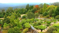 With Sydney lacking a proper autumn, the Blue Mountains is one of the closest areas to experience it. Put a Blue Mountains Autumn escape on your bucket list Grand Canyon Hiking, Steep Rock, Great Western, Deciduous Trees, Grey Skies, Weekends Away, Private Garden, Blue Mountain, Autumn Trees