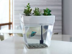 Keep your fishies feeling fresh in this unique self-cleaning AquaFarm fish tank by Back to the Roots. Your fish's waste is converted into nitrates, which feed the plants, while the plants clean the water for your fish. You'll get everything you need to...