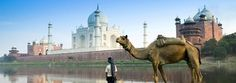 Take a Trip to Agra, home of Taj Mahal. It is a stop on the Golden Triangle of India with Jaipur and Delhi. Book Special Tour Packages to Agra Now! Amritsar, Taj Mahal, Tourist Places, Places To Travel, Oh The Places You'll Go, Places To Visit, Voyager C'est Vivre, Camelus, Excursion