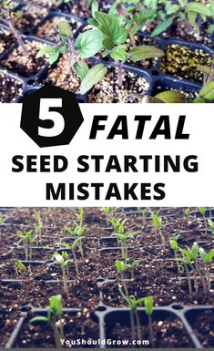 Seed starting mistakes: Starting seeds is so exciting, but what& a gardener to do if they& having problems germinating seeds? If you& wondering what went wrong, you may have made one of these fatal seed starting mistakes. Indoor Vegetable Gardening, Gardening Zones, Home Vegetable Garden, Greenhouse Gardening, Organic Gardening Tips, Hydroponic Gardening, Hydroponics, Container Gardening, Flower Gardening