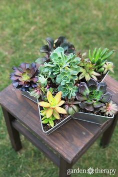 Finished succulent star planter. See how to make it.