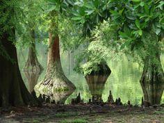Swan Lake Iris Gardens, Sumter, SC