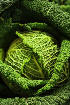 cabbage  Why is this picture of a cabbage so lovely?!