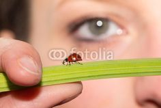 #Ladybird on #Green #Flower #Stalk With #Eye In #Background @fotolia @fotoliaDE #fotolia #macro #nature #season #details #closeup #girl #woman #face #fingers #spring #skin #nose #focus #bokeh #foreground #background #stock #photo #portfolio #download #hires #royaltyfree