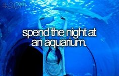 I can tick that one off. Spent night under sharks, stingrays and other sealife at Kelly Tarltons, Auckland, NZ.
