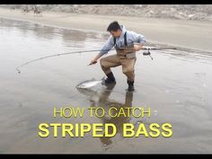 Join our fishing chat group Striped bass fishing Tips and Rigs – On this video I will show you how I catch striped bass enjoy! Fishing Uk, Bass Fishing Tips, Surf Fishing, Salmon Fishing, Best Fishing, Saltwater Fishing, Fishing Lures, Fishing Boats, Spear Fishing