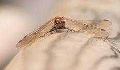 Una libellula a Novembre