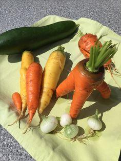 Wachsen in allen Formen. #gartenblog #Karotte #gemüse Carrots, Vegetables, Inspiration, Food, Natural Garden, Harvest, Biblical Inspiration, Carrot, Vegetable Recipes