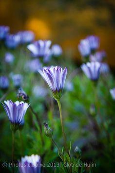 Light  flower of winter