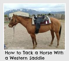 Learn how to tack a horse. In this step-by step tutorial you'll learn how tack up using a western saddle. You'll also find; English Saddling Tutorial - How to Bridle - How to Lead a Horse