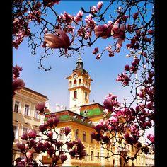 Magnólia és városháza Szegeden / Magnolia and town hall - Szeged, Hungary The Beautiful Country, Beautiful World, Beautiful Places, Beautiful Pictures, Oh The Places You'll Go, Great Places, Places To Visit, Amazing Places, Magnolia