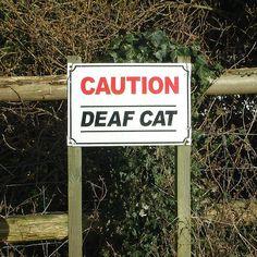 Deaf Cat. Deaf News from Blogsphere by Deaf Chef at Large Blog