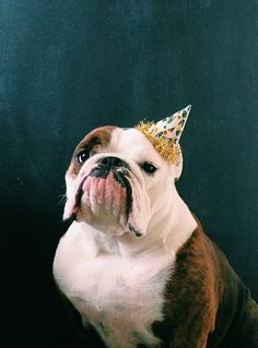 Party Pup! (via @ sjbridgeman's instagram)