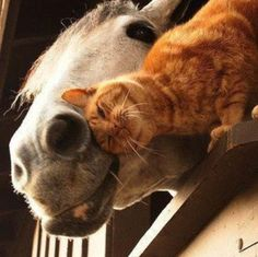 Community Post: 25 Animals Who Are Totally Bffs