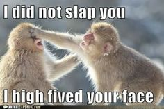 I did not slap you, I high fived your face. #funnyanimals #funnyanimalpictures #monkeys
