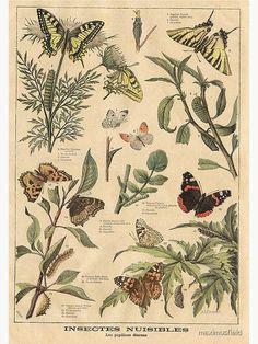 Art Vintage, Vintage Botanical Prints, Botanical Drawings, Botanical Art, Vintage Botanical Illustration, Botanical Posters, Vintage Flower Prints, Vintage Drawing, Vintage Artwork