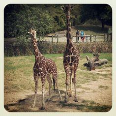 Cameron Park Zoo-Waco,Texas