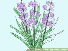 How to Grow Cymbidium Orchids (with Pictures) - wikiHow Orchid Plant Care, Orchid Plants, Cymbidium Orchids, Indoor Orchids, Indoor Plants, Peat Moss, Gardening Tips, House Plants, Gardening