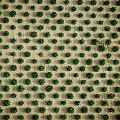 """Desert Orchard, Blyth, CA, 1991"" by Alex MacLean (@landslides)"