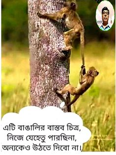 Free Good Morning Images, Good Morning Wishes, Bangla Quotes, Life Quotes, Quotes About Life, Quote Life, Living Quotes, Quotes On Life, Life Lesson Quotes