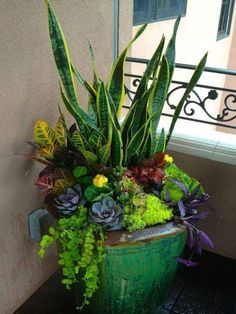 Gorgeous container garden. Proof you don't need a lot of space to have some garden beauty!