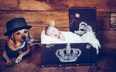 Fotógrafa faz ensaio de recém-nascidos com seus bichos de estimação - Mães - GNT