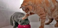 完璧なタイミングで撮影されたニャイスな猫たちの23のミラクル画像 : カラパイア