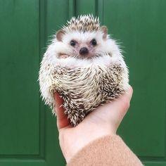 It's #randomactsofkindnessday  Go do something nice! by lionelthehog